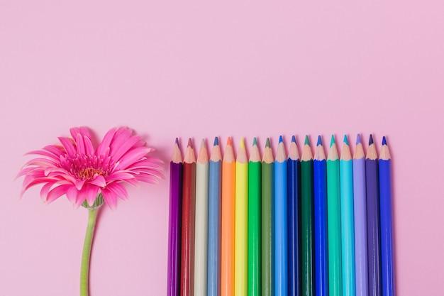 Kleurpotloden en roze bloem op een roze achtergrond