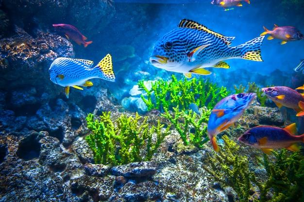Kleurrijk aquarium met verschillende vissen