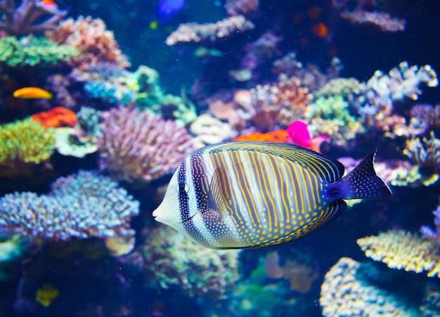 Kleurrijk aquarium