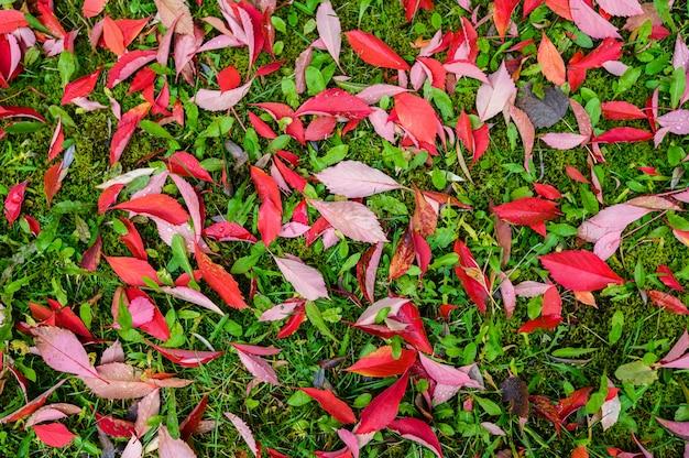 Kleurrijk backroundbeeld van gevallen de herfst rode bladeren