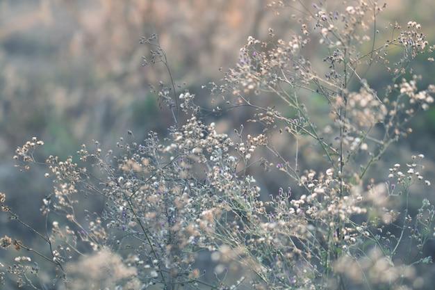Kleurrijk bloemengras dat met gradiënt voor achtergrond wordt gemaakt