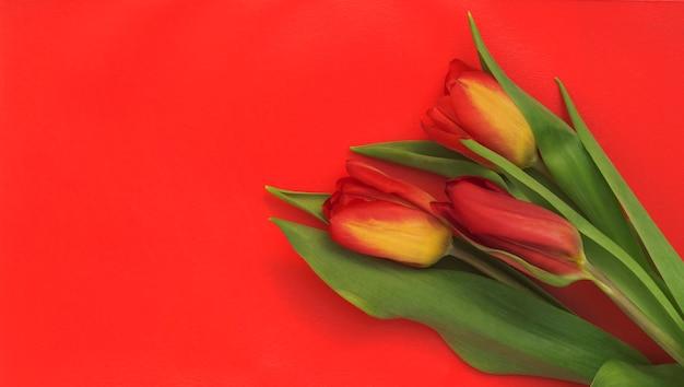Kleurrijk boeket tulpen op een rode achtergrond.