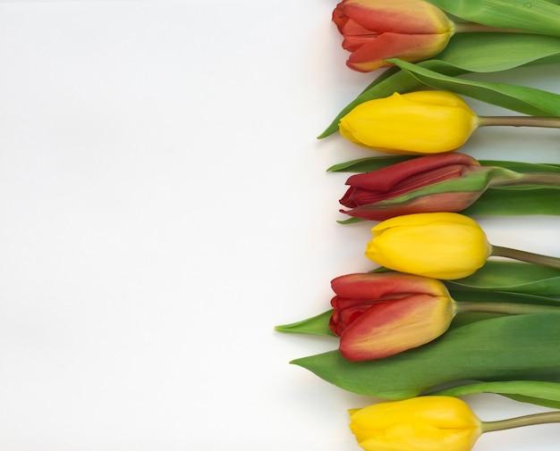 Kleurrijk boeket tulpen op een witte achtergrond.
