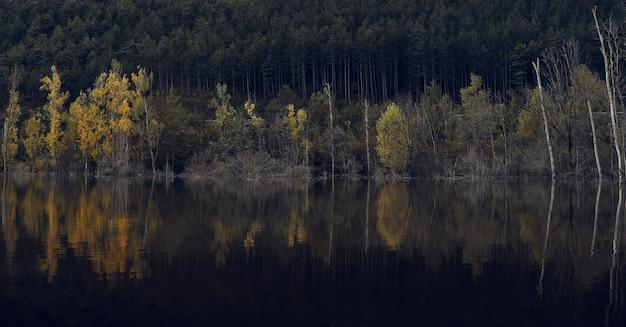 Kleurrijk bos in de herfst in de jungle van irati. kleurrijk bos in de herfst. kleurrijk beuken- en sparrenbos in de herfst. meer omgeven door een bos in de herfst. irati bos in de herfst