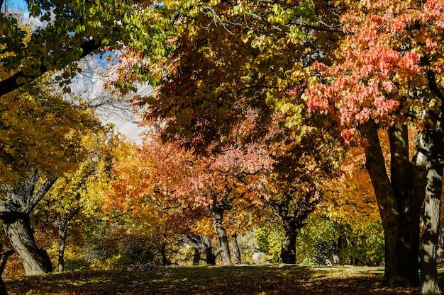 Kleurrijk gebladerte in de herfst, altit-koninklijke tuin, gilgit-baltistan, pakistan.