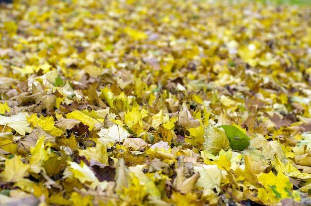 Kleurrijk gebladerte in het de herfstpark