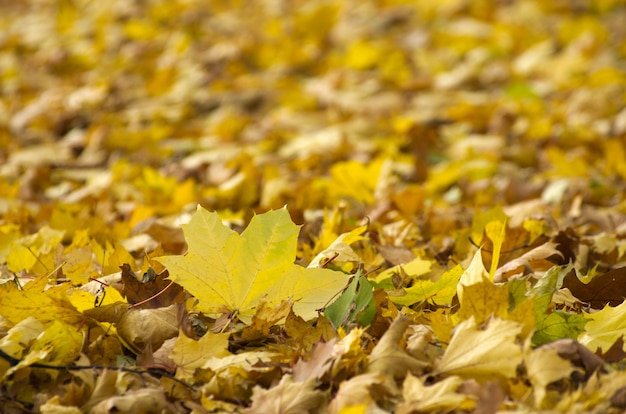 Kleurrijk gebladerte in het herfstpark