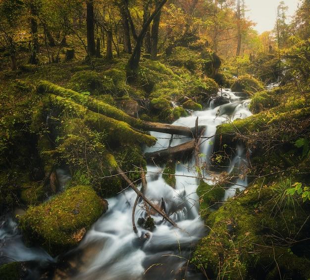 Kleurrijk groen bos met waterval bij bergrivier bij zonsondergang