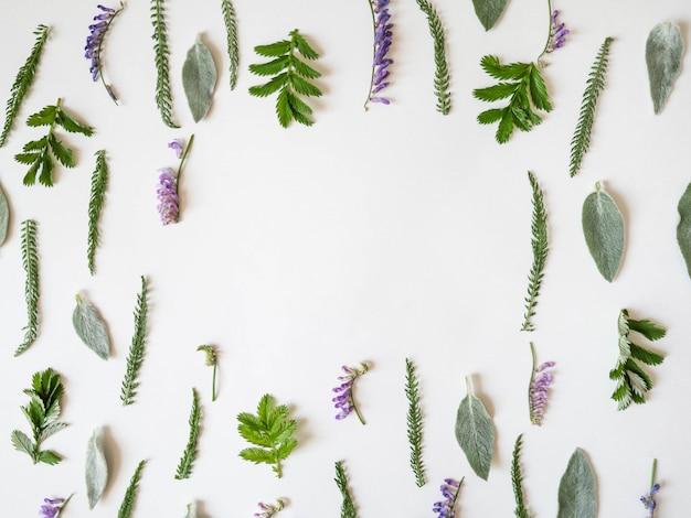 Kleurrijk helder patroon van weidekruiden en bloemen op witte achtergrond. plat lag, bovenaanzicht, natuurlijke achtergrond