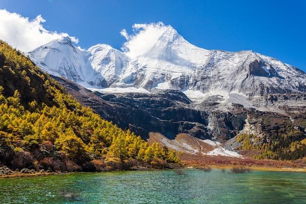 Kleurrijk in de herfstbos en sneeuwberg bij yading-natuurreservaat, laatste shangri-la