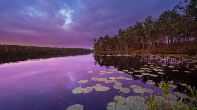 Kleurrijk landschap bij zonsondergang, meer met waterlelies in een dennenbos op een zomeravond