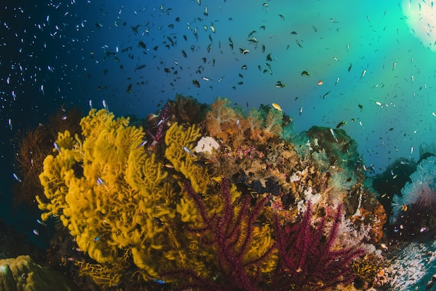 Kleurrijk onderwater offshore rocky rif met koraal en spons a