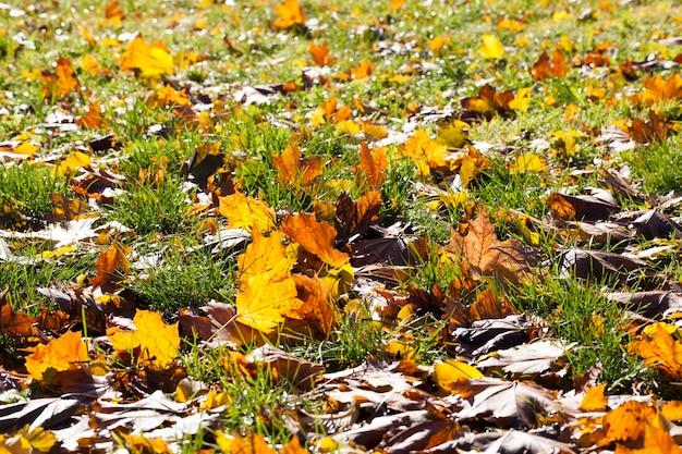 Kleurrijk vergeeld blad in het herfstseizoen, zonnig warm weer midden in de herfst