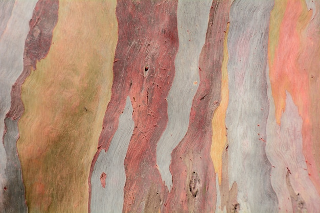 Kleurrijke abstracte patroontextuur van de schors van de eucalyptusboom