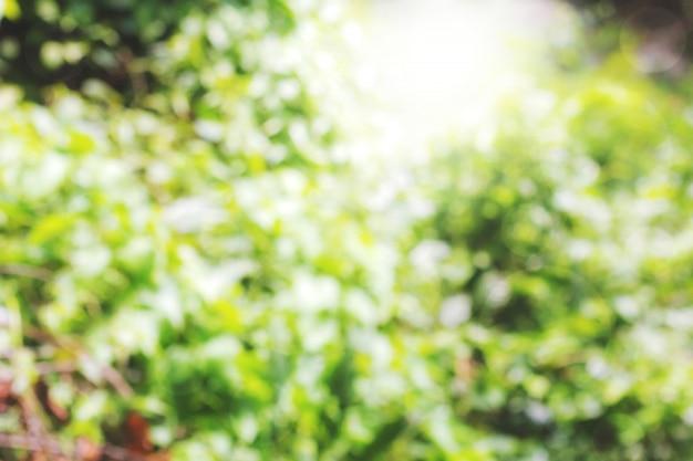 Kleurrijke achtergrond in groene kleuren, het bokeh-effect