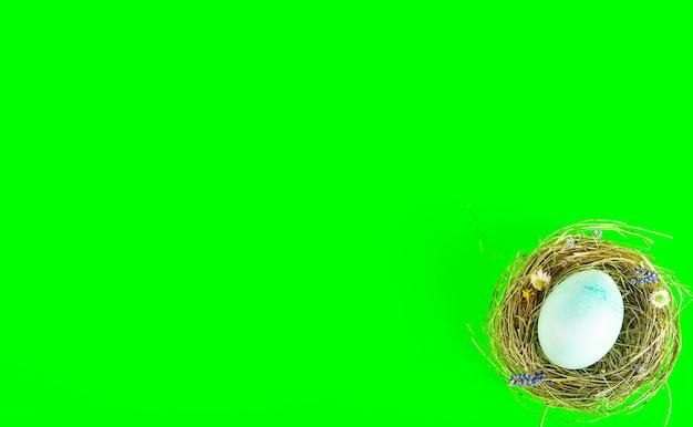 Kleurrijke achtergrond met paaseieren op groene achtergrond. vrolijk pasen-concept. kan worden gebruikt als poster, achtergrond, kerstkaart. plat leggen, bovenaanzicht, kopie ruimte. studio foto