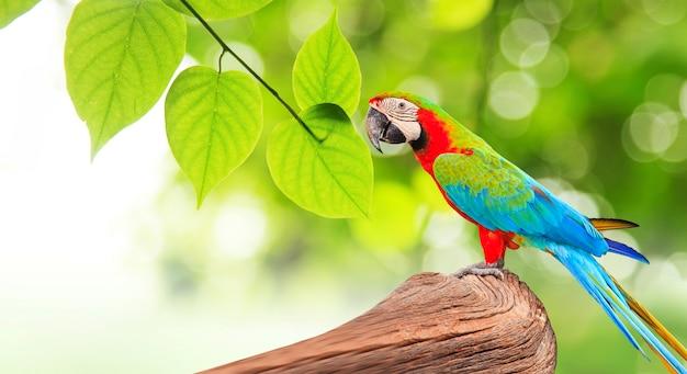 Kleurrijke aravogel bij boomtak in ochtendzonlicht
