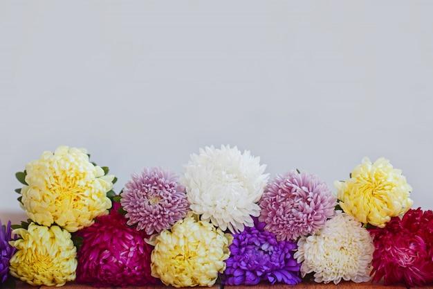 Kleurrijke asterbloemen op houten achtergrond. callistephus chinensis.