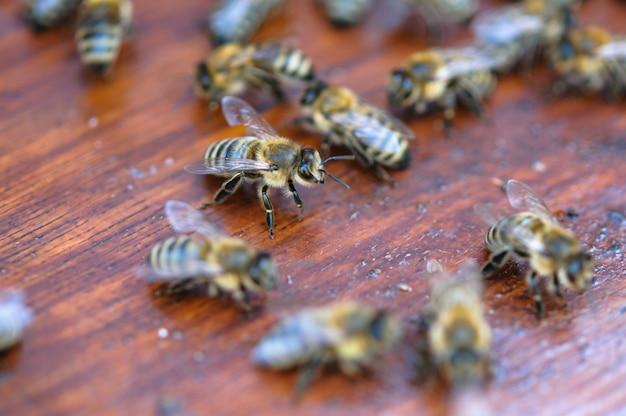 Kleurrijke bewegende bijen op houten raad van bijenkorf