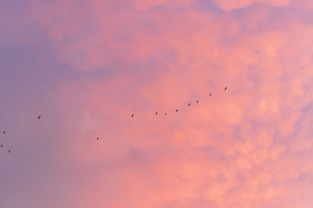 Kleurrijke bewolkte hemel bij zonsondergang. overgangskleur. hemeltextuur, abstracte aardachtergrond