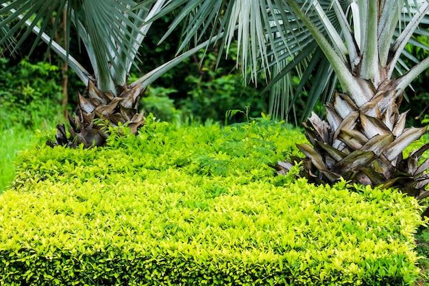 Kleurrijke bladeren en palmen in de tuin tijdens het regenseizoen