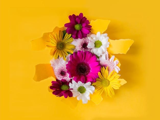 Kleurrijke bloeiende madeliefjes op gescheurde gele document achtergrond
