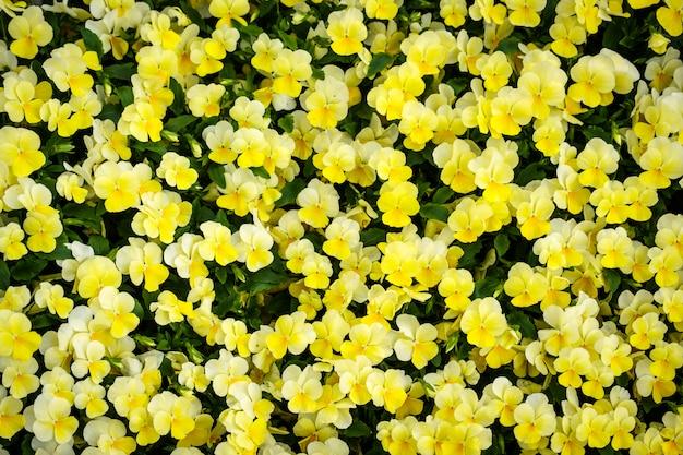 Kleurrijke bloemachtergrond in de tuin van de de zomerkas