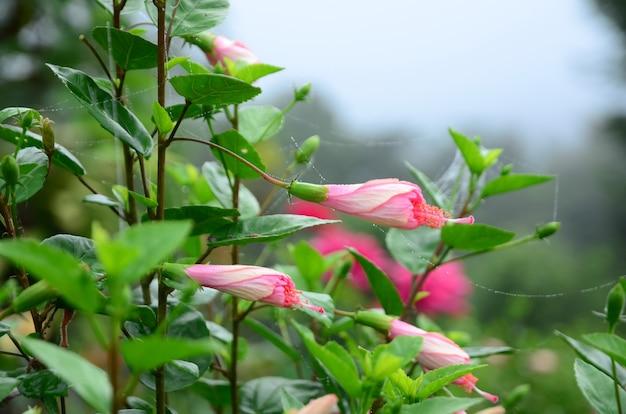 Kleurrijke bloemen en ochtendzon