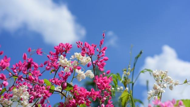 Kleurrijke bloemen in de tuin mooie bloemen in de tuin die in de zomer bloeien