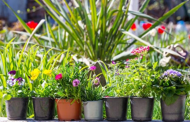Kleurrijke bloemen in de tuin