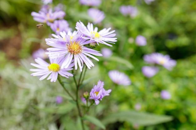 Kleurrijke bloemen in scherptediepte