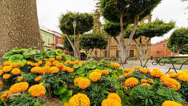 Kleurrijke bloemen op de voorgrond op een stadsplein in gran canaria naast een oude kerk. spanje. europa,
