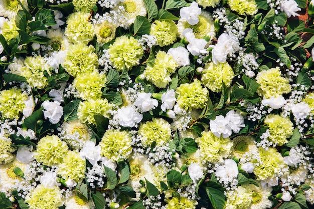 Kleurrijke bloemen. plat leggen van witte en groene anjerbloemen.