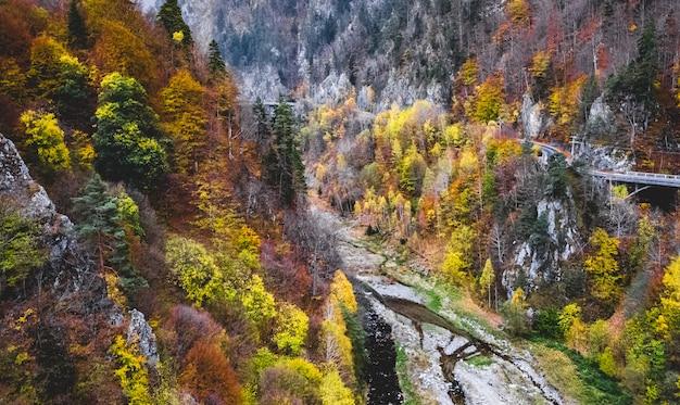 Kleurrijke bomen in de bergen
