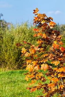 Kleurrijke bomen in het bos in de herfst, het gebladerte van bomen verandert van kleur tijdens bladval