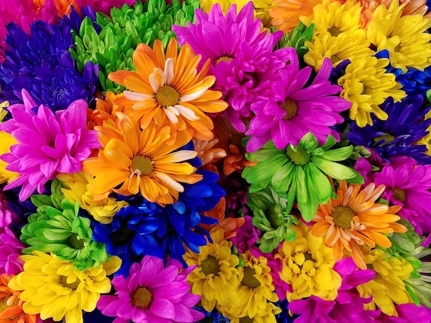 Kleurrijke chrysanten