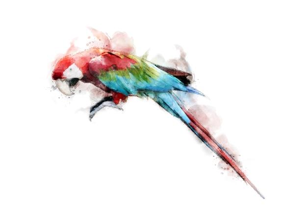 Kleurrijke colorwater tekening ara vogel achtergrond.