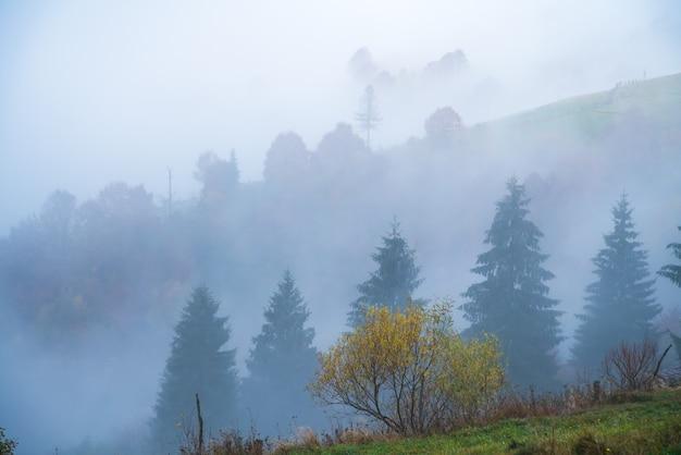Kleurrijke dichte bossen in de warmgroene bergen van de karpaten bedekt met dikke grijze mist