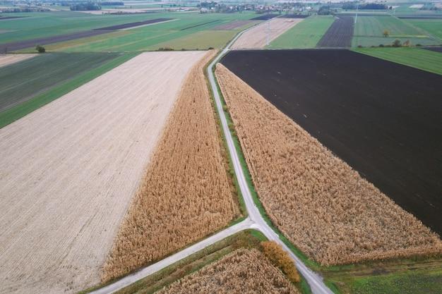 Kleurrijke en rechthoekige velden met maïs en tarwe vanuit vogelperspectief