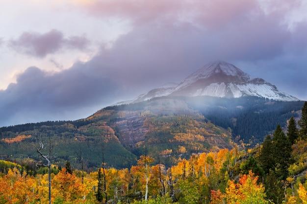 Kleurrijke gele herfst in colorado, verenigde staten. herfst seizoen.