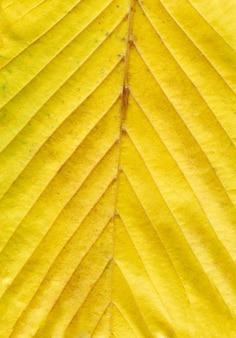 Kleurrijke heldere achtergrond van de herfstblad