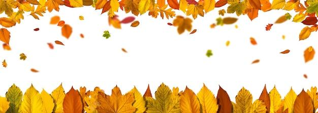 Kleurrijke heldere bladeren geïsoleerd op een witte achtergrond in een frame