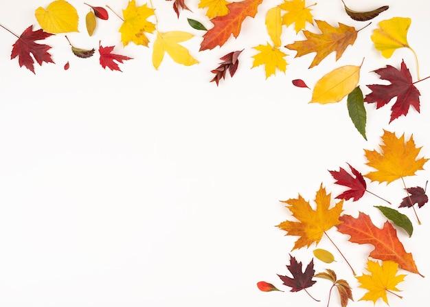Kleurrijke helft van frame van gevallen herfstbladeren heldere herfstbladeren concept van herfstmaand