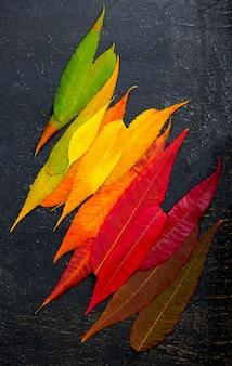 Kleurrijke herfst blad achtergrond. herfstbladeren palet