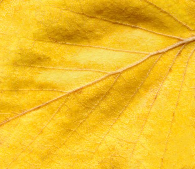 Kleurrijke herfst blad achtergrond