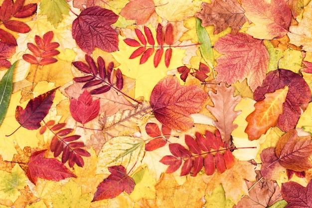 Kleurrijke herfstbladeren. boom gevallen blad patroon. herfst seizoen prachtige natuur achtergrond
