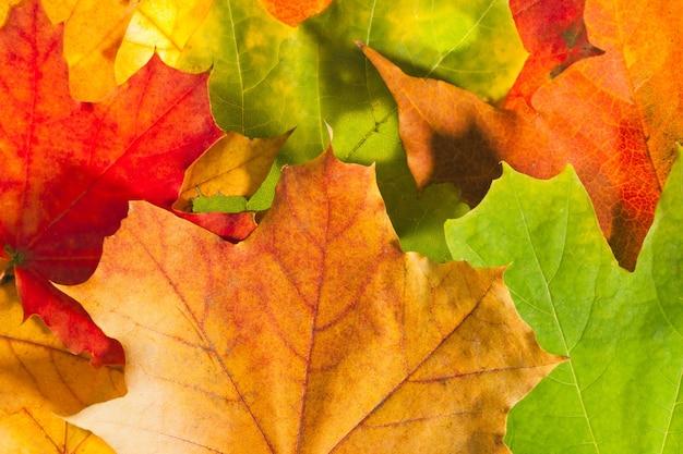 Kleurrijke herfstbladeren. gebruik voor achtergrond of textuur