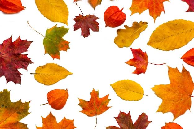 Kleurrijke herfstbladeren met physalis bloemen geïsoleerd op een witte achtergrond