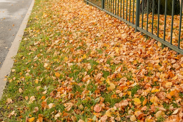 Kleurrijke herfstbladeren op oude hek in park