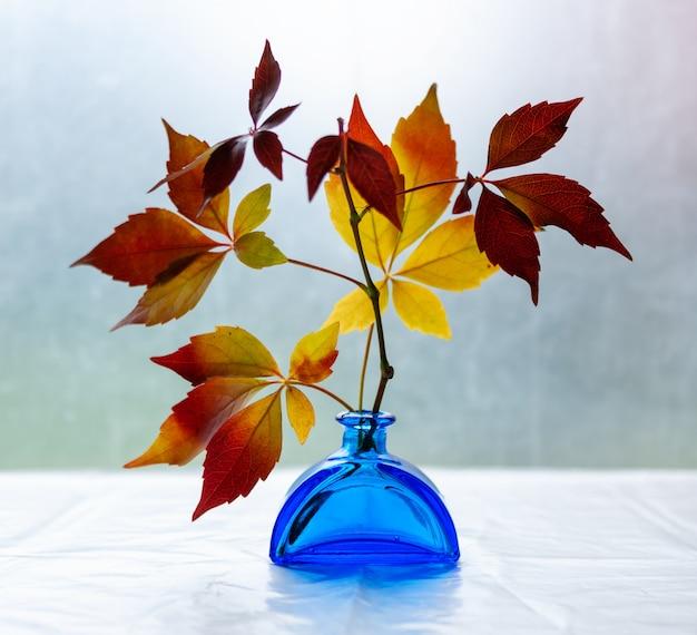 Kleurrijke herfstbladeren van wilde druiven in een blauwe vaas,
